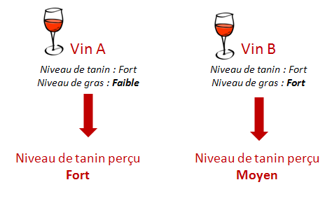 perception tanin du vin