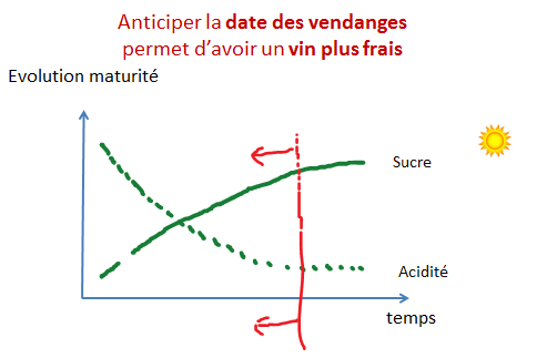 anticiper date vendange acidite vin