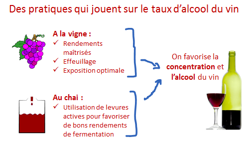 facteur augmentation alcool vin