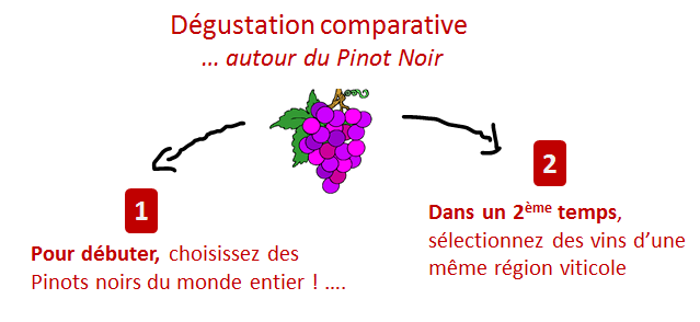 degustation comparative pinot noir
