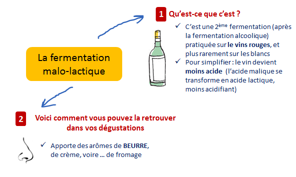 apport fermentation malolactique