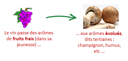 evolution aromes vins