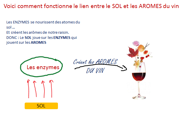 enzymes sol aromes vin